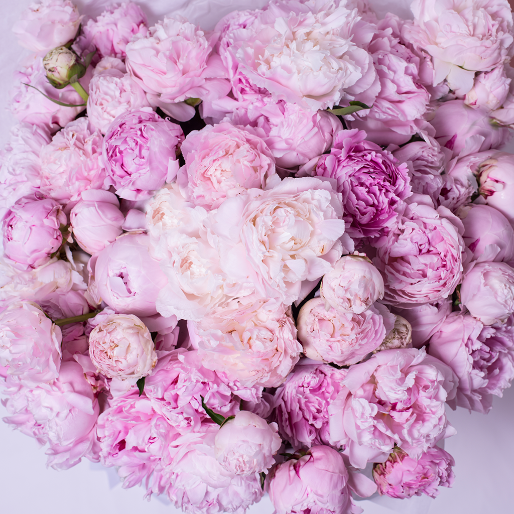 Mille Rose Collection - One Billion Box - Peonie Rosa Mix - Scatola Bianca