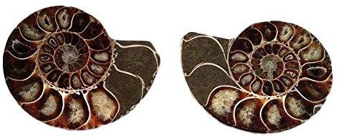 "Genuine Ammonite Fossil PAIR - 3.25"" - Split & Polished - From Madagascar (3) - dinosaursrocksuperstore"