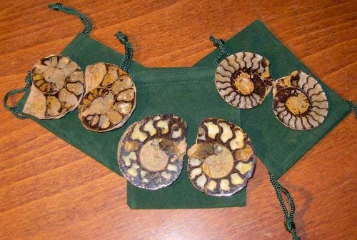 Genuine Fossil Ammonite Pair - Split & Polished - Gift Packaged - dinosaursrocksuperstore