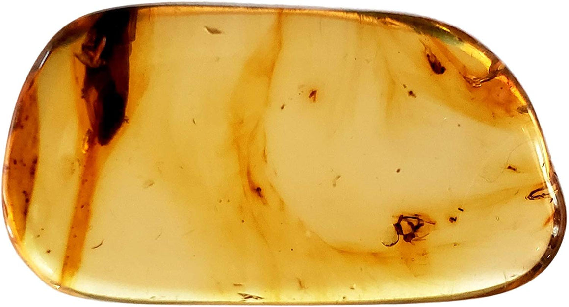 Genuine Amber Fossil Specimen - Multiple Insect Inclusions - Naturally Formed from Colombia with Bugs Inside - Museum Grade, A-Grade - Great Collectible - Piece #15 (30mm x 17mm) - dinosaursrocksuperstore