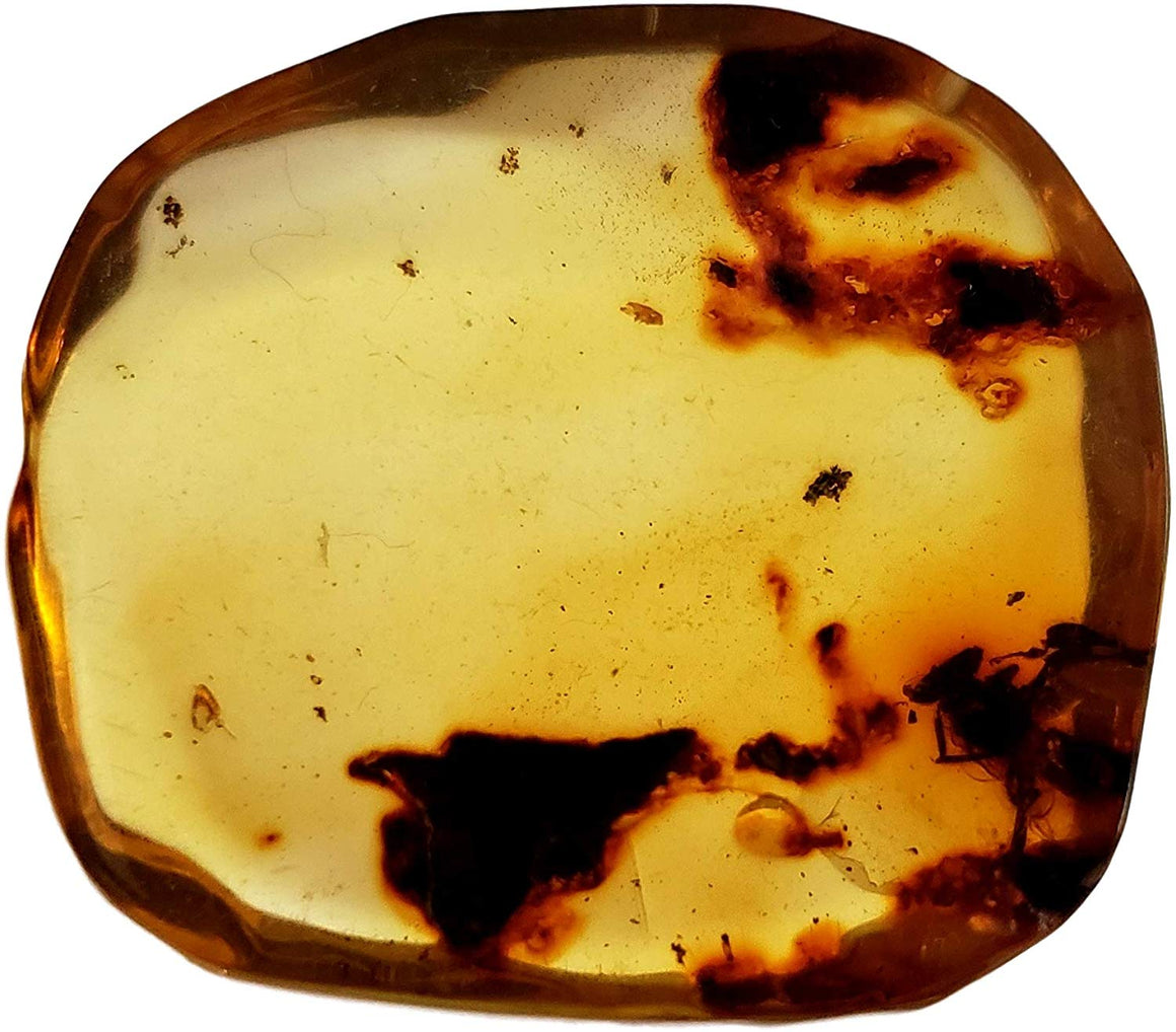 Genuine Amber Fossil Specimen - Multiple Insect Inclusions - Naturally Formed from Colombia with Bugs Inside - Museum Grade, A-Grade - Great Collectible - Piece #18 (29mm x 27mm) - dinosaursrocksuperstore