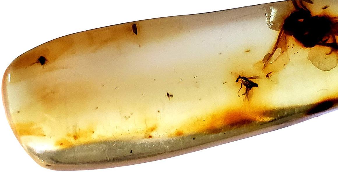 Genuine Amber Fossil Specimen - Multiple Insect Inclusions - Naturally Formed from Colombia with Bugs Inside - Museum Grade, A-Grade - Great Collectible - Piece #12 (42mm x 14mm) - dinosaursrocksuperstore