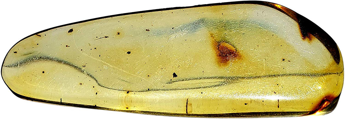 Genuine Amber Fossil Specimen - Multiple Insect Inclusions - Naturally Formed from Colombia with Bugs Inside - Museum Grade, A-Grade - Great Collectible (48mm x 17mm) - dinosaursrocksuperstore