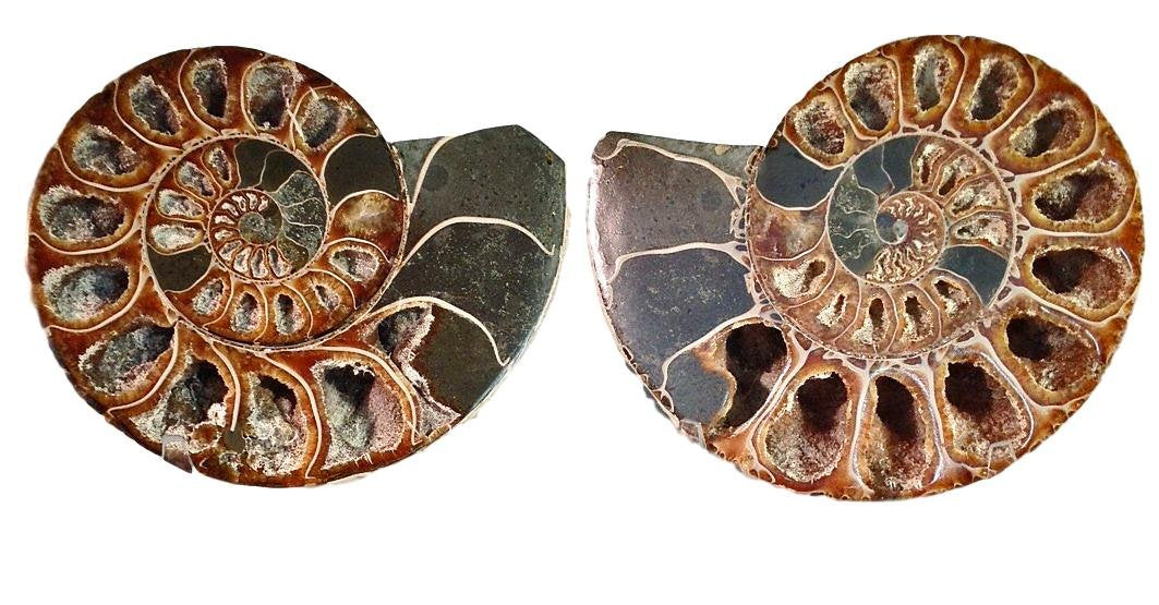 "Genuine Ammonite Fossil Pair - 4.5"" - Split & Polished - from Madagascar (22) - dinosaursrocksuperstore"