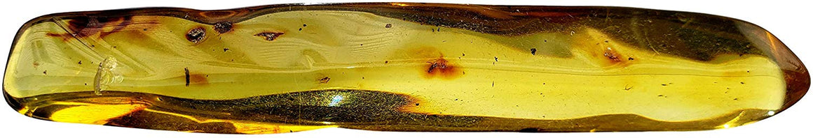 Genuine Amber Fossil Specimen - Multiple Insect Inclusions - Naturally Formed from Colombia with Bugs Inside - Museum Grade, A-Grade - Great Collectible (68mm x 9mm) - dinosaursrocksuperstore