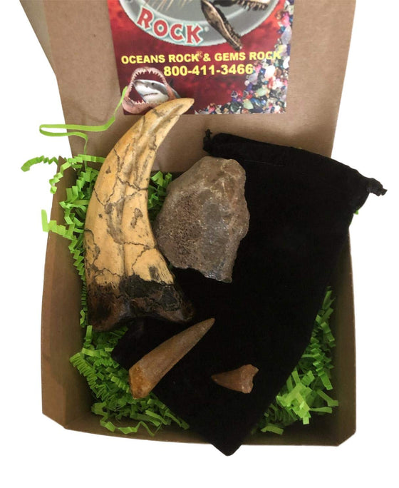Dinosaur and Fossil Gift Collection - Set of 4 - Real Dinosaur Bone, Mosasaur Tooth, Spinosaurus Dinosaur Tooth and Raptor Claw Replica - dinosaursrocksuperstore