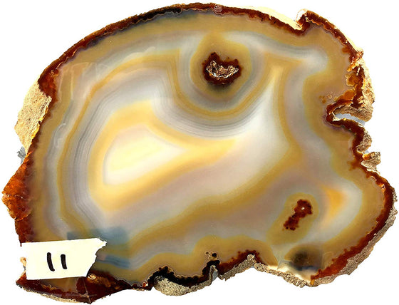 Slices Agate Tan 11 - dinosaursrocksuperstore