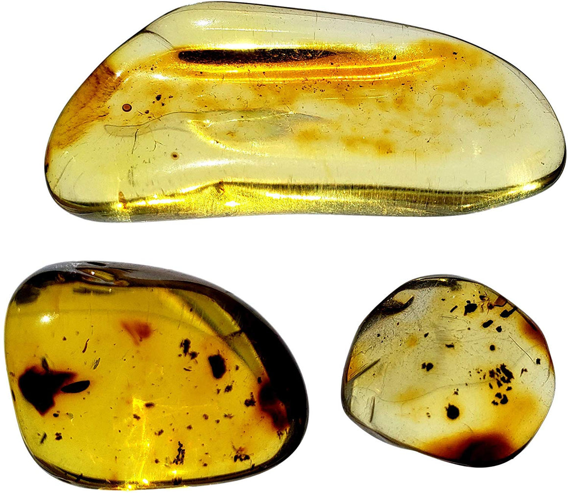 Genuine Colombian Amber Fossil Specimen - Naturally Formed - May Contain Inclusions - Great Collectible - dinosaursrocksuperstore