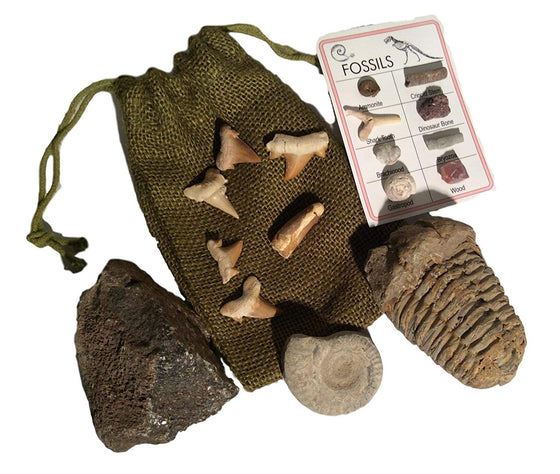 Fossil Gift Collection - Genuine Dinosaur Bone, Spinosaurus Dinosaur Tooth, Ammonite, Trilobite, Shark Teeth with Bonus ID Chart - Gift Boxed - dinosaursrocksuperstore