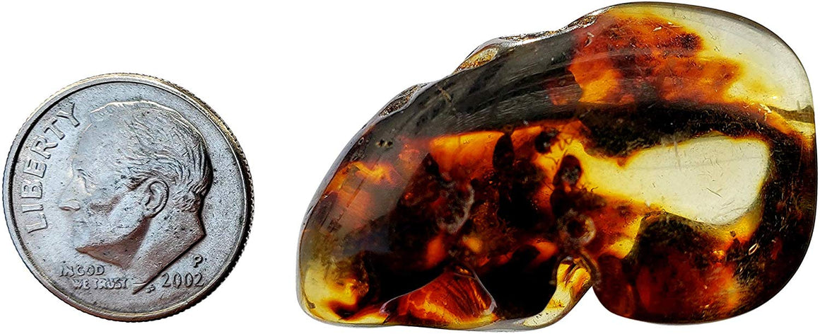 Genuine Amber Fossil Specimen - Multiple Insect Inclusions - Naturally Formed from Colombia with Bugs Inside - Museum Grade, A-Grade - Great Collectible (35mm x 23mm) - dinosaursrocksuperstore