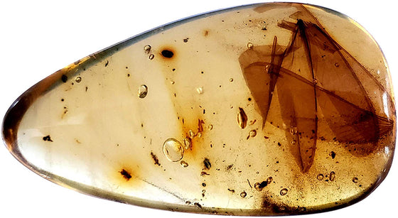 Genuine Amber Fossil Specimen - Multiple Insect Inclusions - Naturally Formed from Colombia with Bugs Inside - Museum Grade, A-Grade - Great Collectible - Piece #17 (28mm x 17mm) - dinosaursrocksuperstore