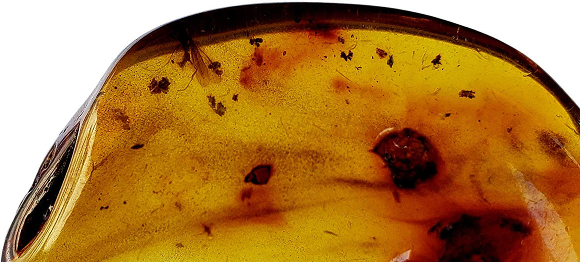Genuine Amber Fossil Specimen - Multiple Insect Inclusions - Naturally Formed from Colombia with Bugs Inside - Museum Grade, A-Grade - Great Collectible (38mm x 20mm) - dinosaursrocksuperstore