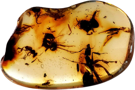 Genuine Amber Fossil Specimen - Multiple Insect Inclusions - Naturally Formed from Colombia with Bugs Inside - Museum Grade, A-Grade - Great Collectible - Piece #11 (23mm x 16mm) - dinosaursrocksuperstore