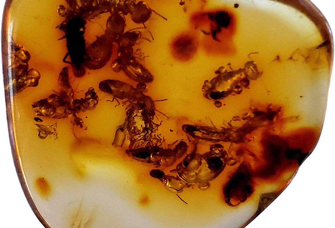 Genuine Amber Fossil Specimen - Multiple Insect Inclusions - Naturally Formed from Colombia with Bugs Inside - Museum Grade, A-Grade - Great Collectible - Piece #13 (25mm x 23mm) - dinosaursrocksuperstore