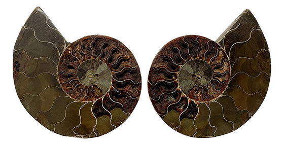 Genuine Ammonite Fossil Pair - Split and Polished - from Madagascar (8) - dinosaursrocksuperstore