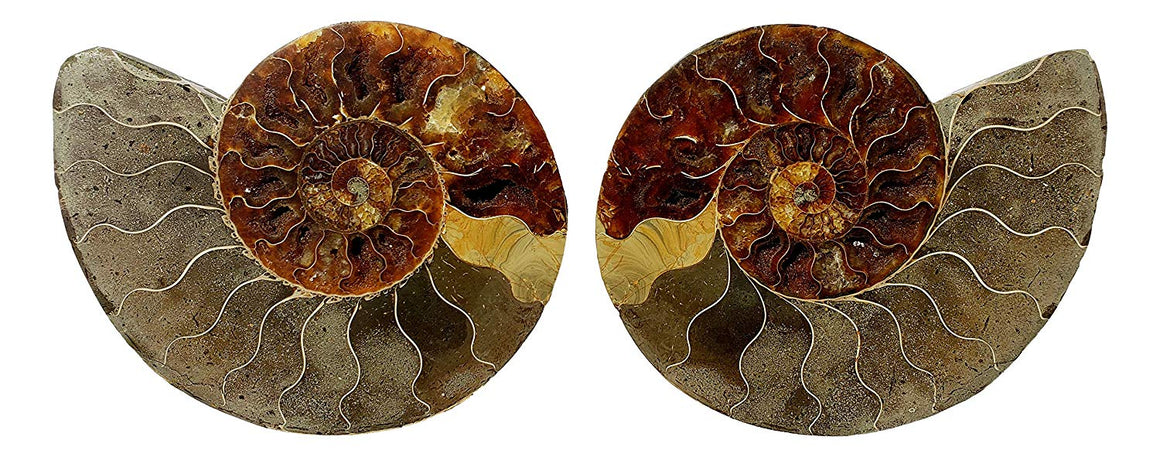Genuine Ammonite Fossil Pair - Split and Polished - from Madagascar (4) - dinosaursrocksuperstore