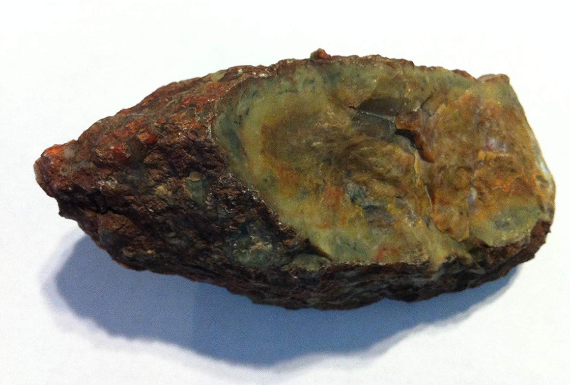 "Genuine Fossil Coprolite - Fossilized Dino""Poop"" (Large) - dinosaursrocksuperstore"