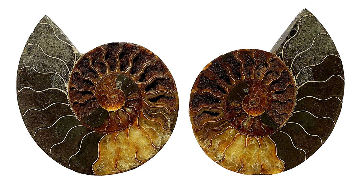 Genuine Ammonite Fossil Pair - Split and Polished - from Madagascar (9) - dinosaursrocksuperstore