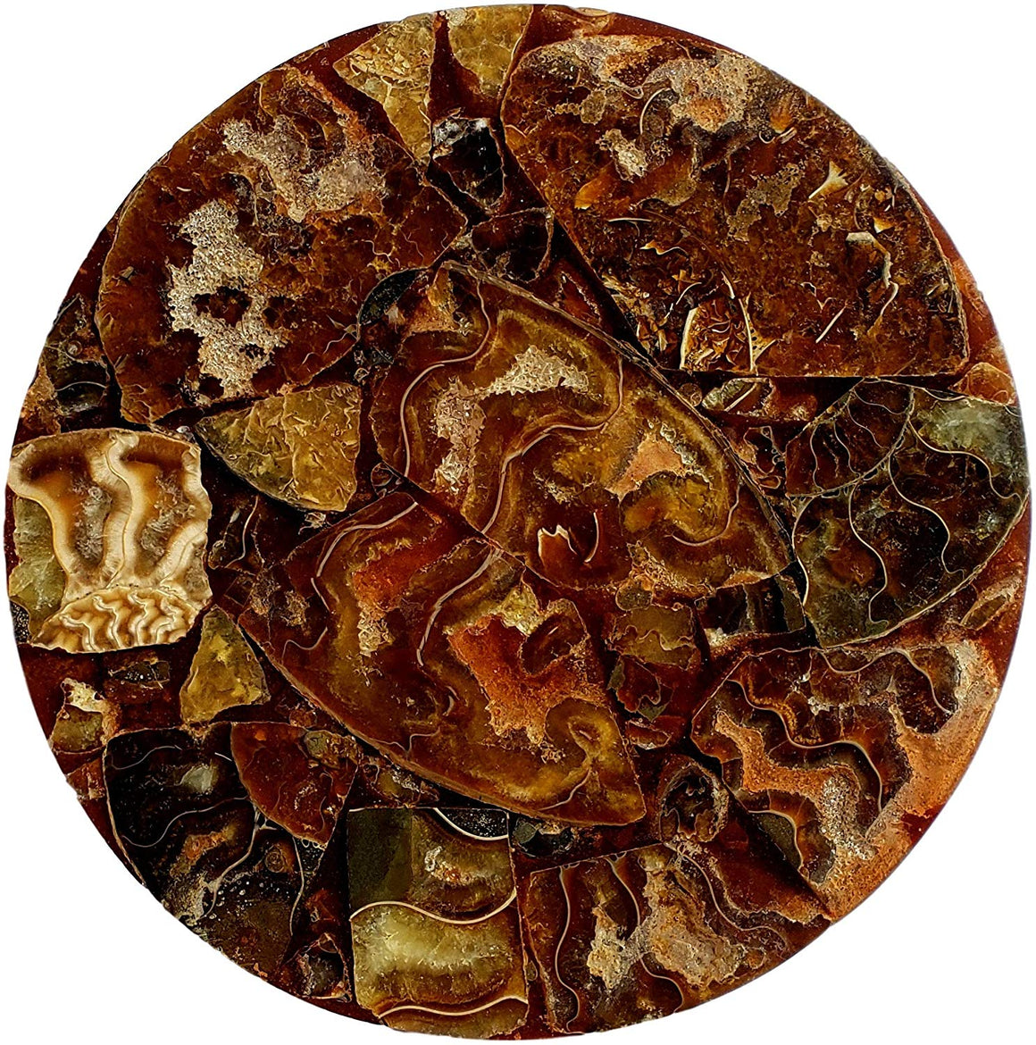 Genuine Multi-Ammonite Fossil Collage Display Specimen and Decorative Serving Platter or Large Coaster from Madagascar (Small) - dinosaursrocksuperstore