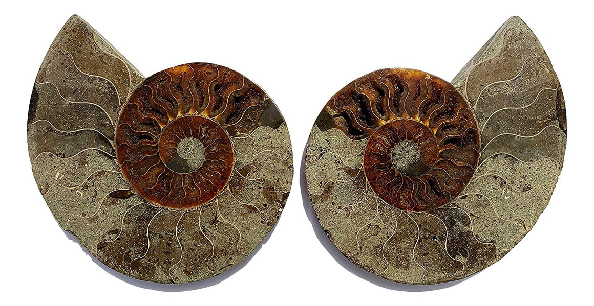Genuine Ammonite Fossil Pair - Split and Polished - from Madagascar (16)
