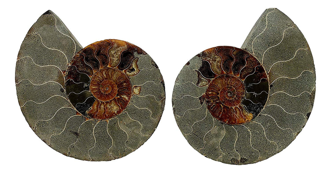 Genuine Ammonite Fossil Pair - Split and Polished - from Madagascar (11) - dinosaursrocksuperstore