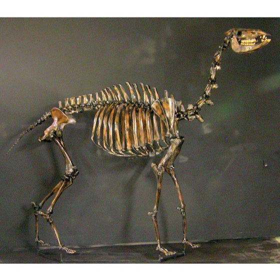 Yesterday's Camel Mounted Skeleton - dinosaursrocksuperstore
