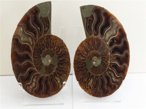 Genuine Ammonite Fossil Pair: Split & Polished - from Madagascar (11) - dinosaursrocksuperstore