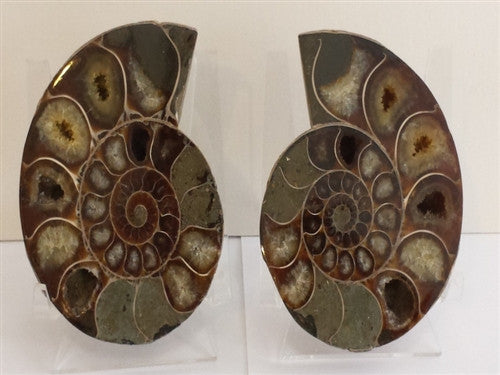 Genuine Ammonite Fossil Pair: Split & Polished - from Madagascar (13) - dinosaursrocksuperstore