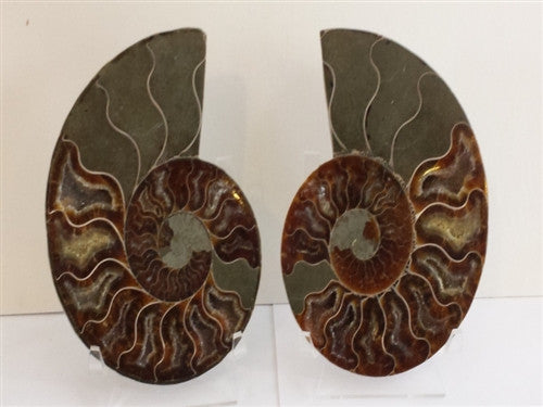 Genuine Ammonite Fossil Pair: Split & Polished - from Madagascar (16) - dinosaursrocksuperstore