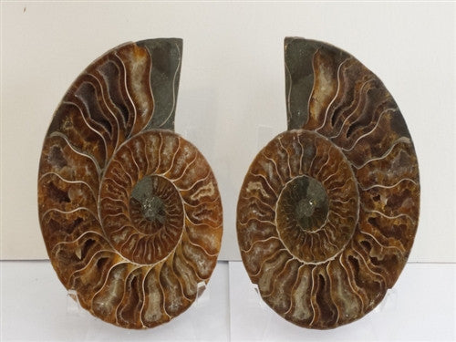 Genuine Ammonite Fossil Pair: Split & Polished - from Madagascar (17) - dinosaursrocksuperstore