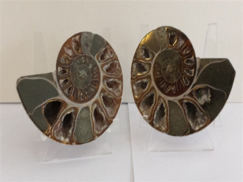 Genuine Ammonite Fossil Pair: Split & Polished - from Madagascar (18) - dinosaursrocksuperstore
