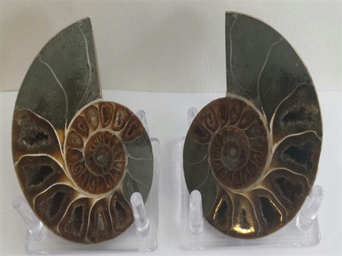 Genuine Ammonite Fossil Pair: Split & Polished - from Madagascar (3) - dinosaursrocksuperstore