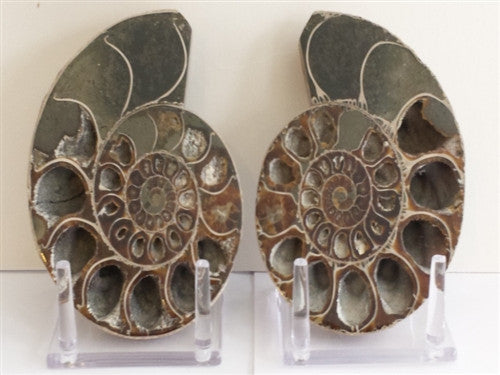 Genuine Ammonite Fossil Pair: Split & Polished - from Madagascar (8) - dinosaursrocksuperstore