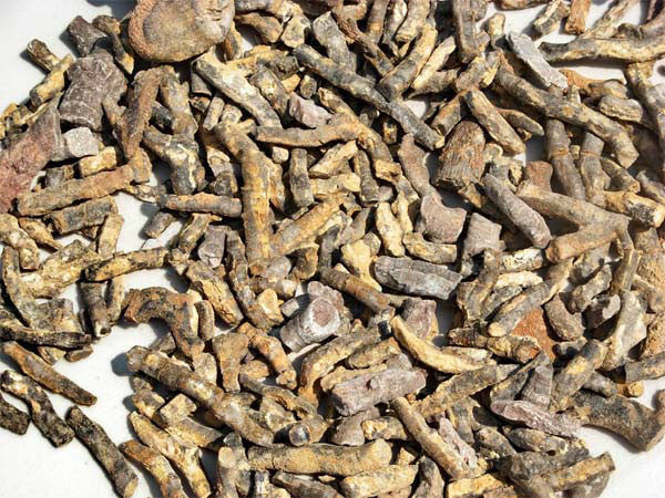 Bulk Fossils - Fossil Coral - Sold By the LB (Pound) - dinosaursrocksuperstore