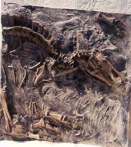 Dinosaur Fossil Dig Site Panel - Maiasaura Front Replica - dinosaursrocksuperstore