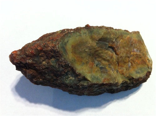 Coprolite - Real Fossil Dinosaur Poop - great gift! - dinosaursrocksuperstore
