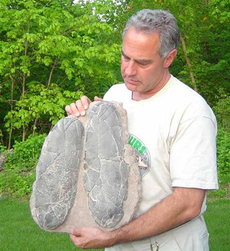 Giant Therapod Dinosaur Egg Nest replica - cast from original fossil - dinosaursrocksuperstore