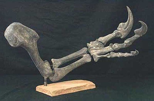 Allosaurus Arm Replica (Complete & Huge!!) - dinosaursrocksuperstore