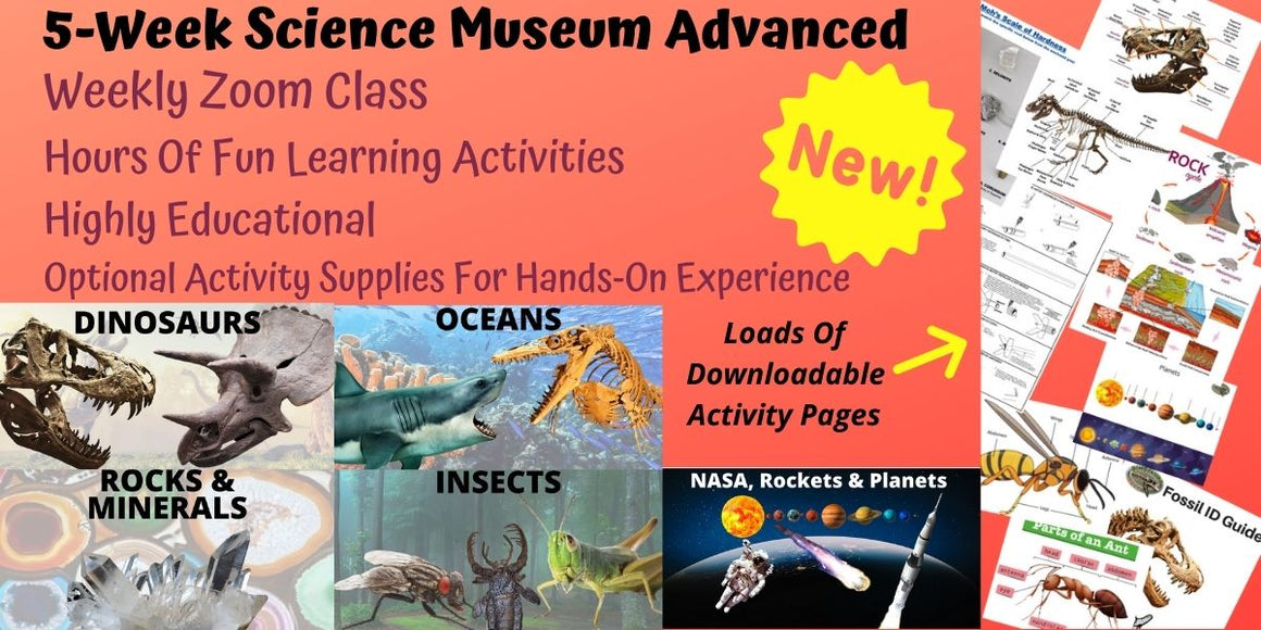 DINOSAURS ROCK Advanced: 5-Week Virtual Class w/ DIY Activity Supplies - 5 Science Themes - Thursdays @ 3:45PM EST