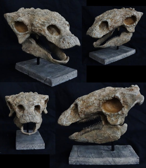 Gastonia Skull Replica with base From Juvenile Skeleton - dinosaursrocksuperstore