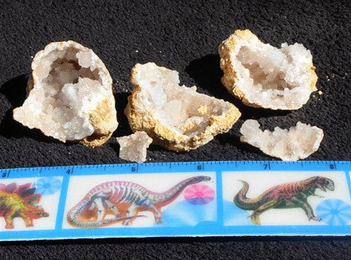 "Geodes  -  Break Your Own - 2""-4"" wide! - dinosaursrocksuperstore"
