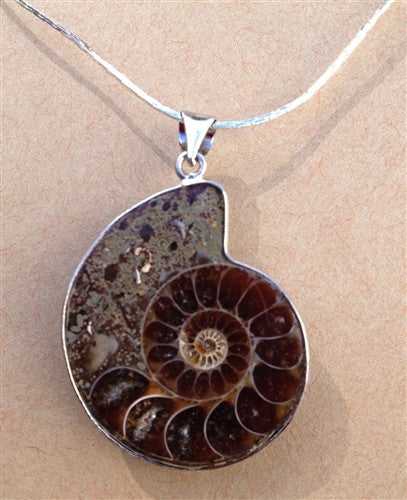 "Ammonite Fossil Necklace 18"" Silver Plate Chain - Gift Boxed! - dinosaursrocksuperstore"