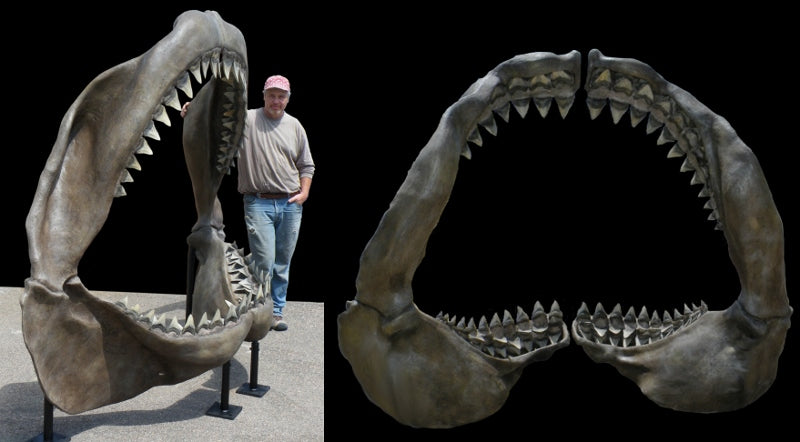 Megalodon Jaw Replica - dinosaursrocksuperstore