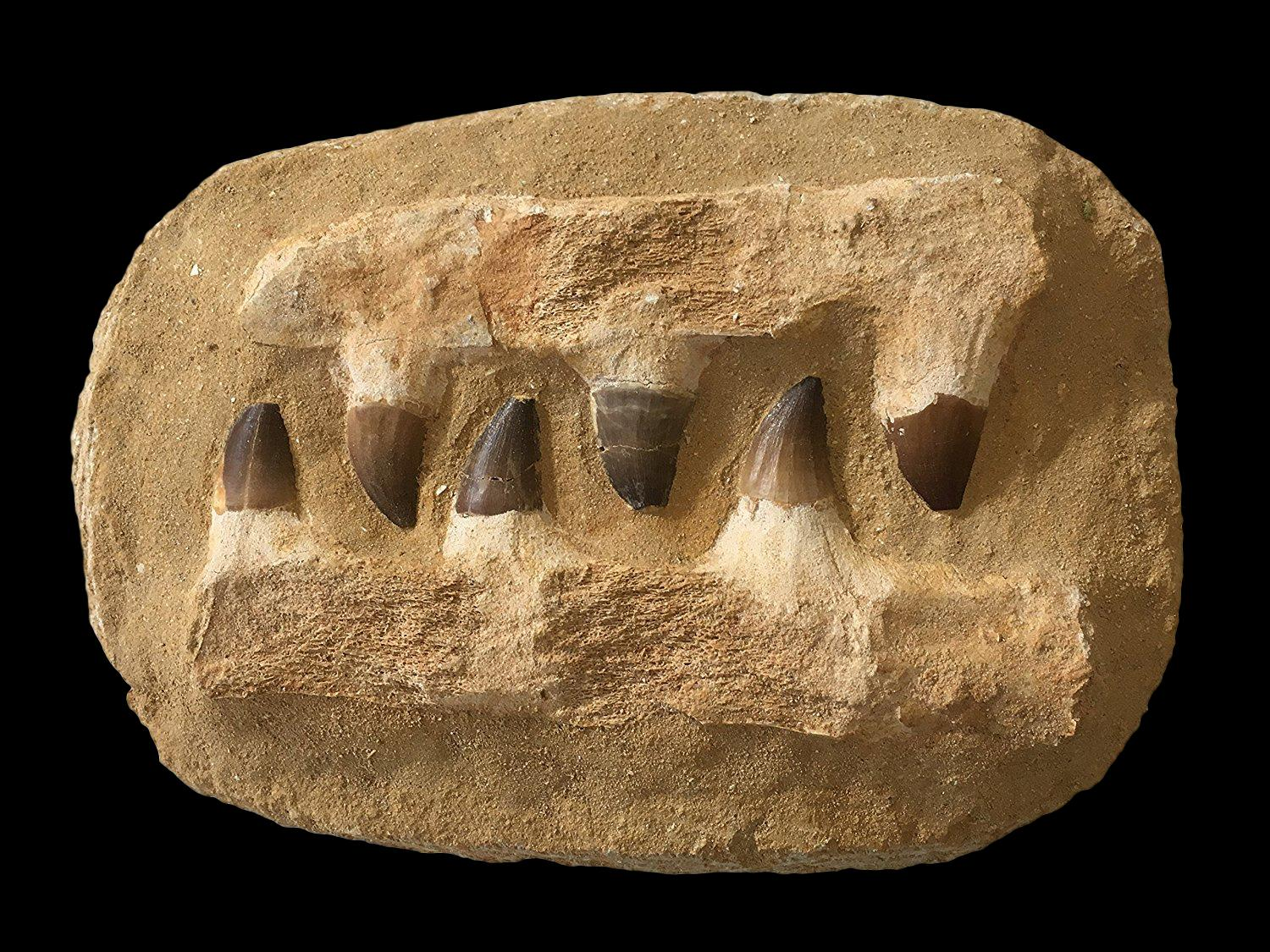 Image result for mosasaur jaw