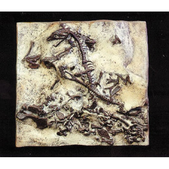 AEROSAURUS Therapsida In-situ cast of the middle Triassic mamal-like reptile. 23X15in.