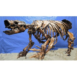 Paramylodon Harlan's Ground Sloth Skeleton Replica - dinosaursrocksuperstore