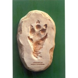 Armadillo Little Critter Footprint Replica - dinosaursrocksuperstore