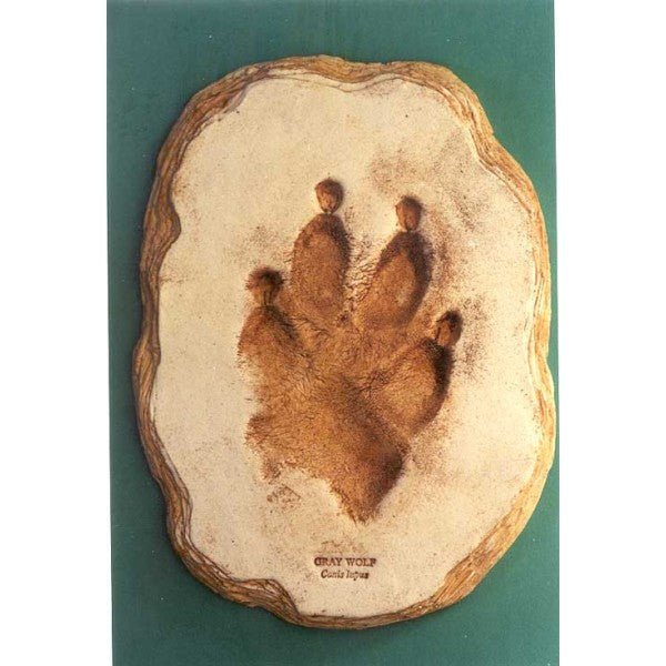 Gray Wolf Footprint Replica - dinosaursrocksuperstore
