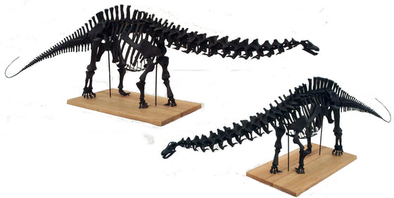 Apatosaurus Skeleton Model 1/12th Scale Replica - dinosaursrocksuperstore