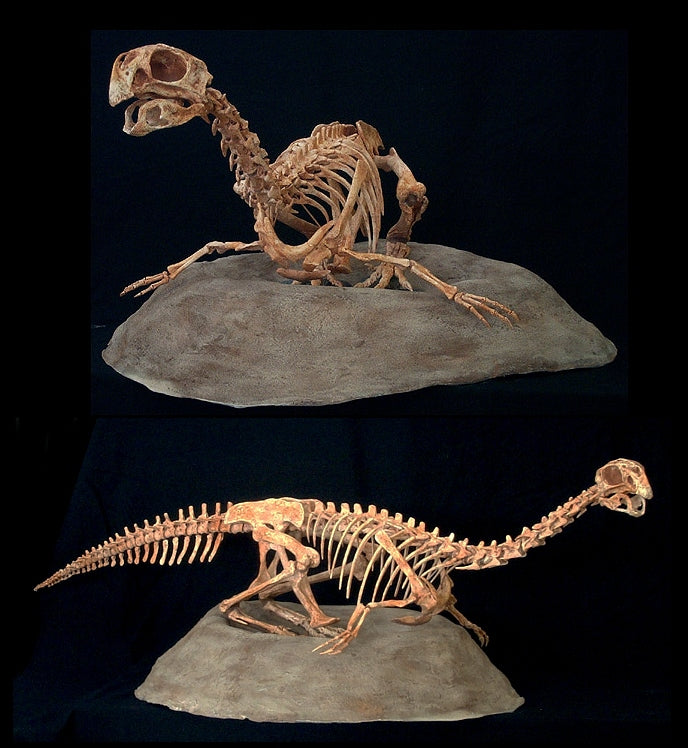 Conchoraptor Adult Replica on Nest - dinosaursrocksuperstore